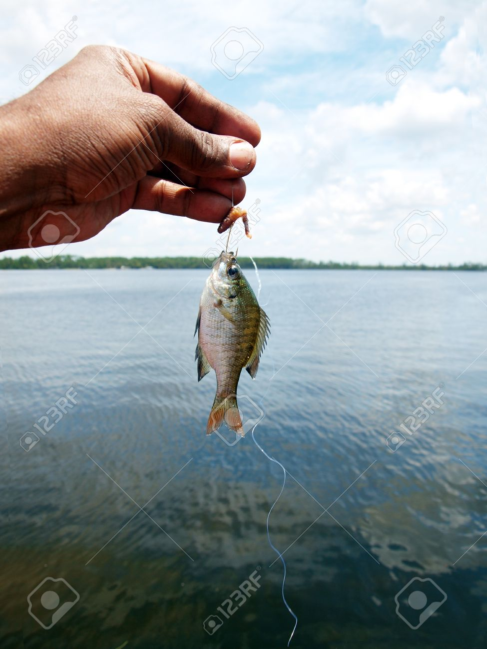 a tiny fish caught while fishing using worm as the bait at a, Fly Fishing Bait