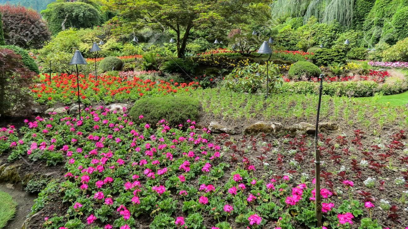 Schöner Garten Standard Bild   49054046