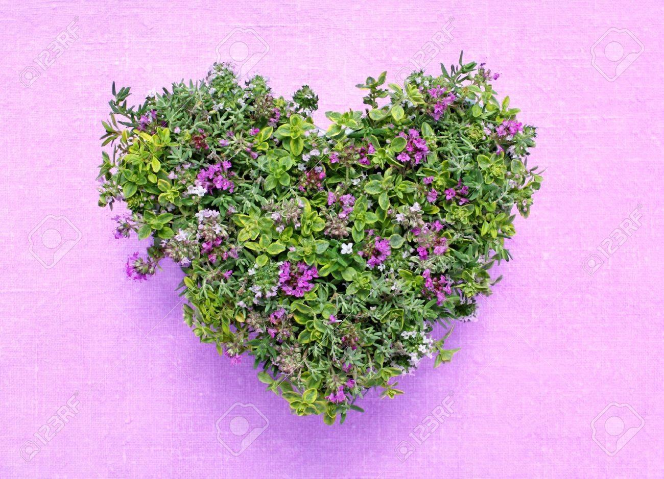 Différentes Variétés De Thym coeur faite de différentes variétés de thym