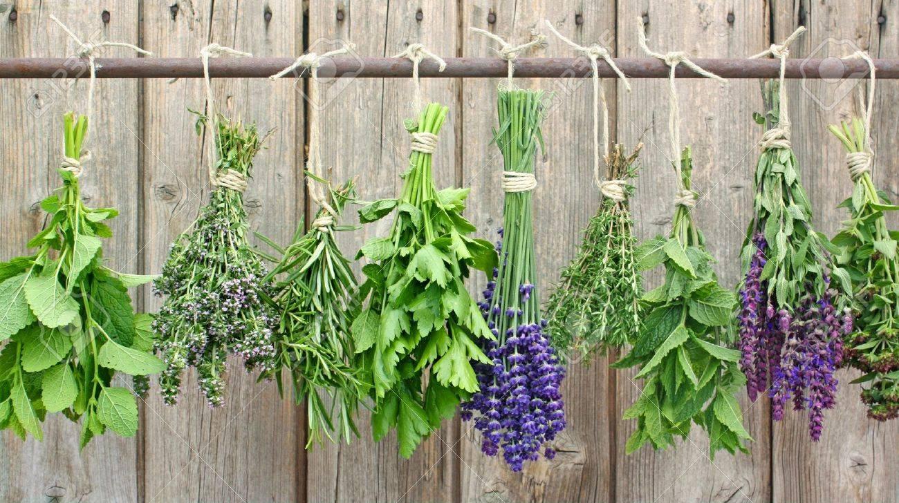 various herbs hanging on an iron rod - 14287007