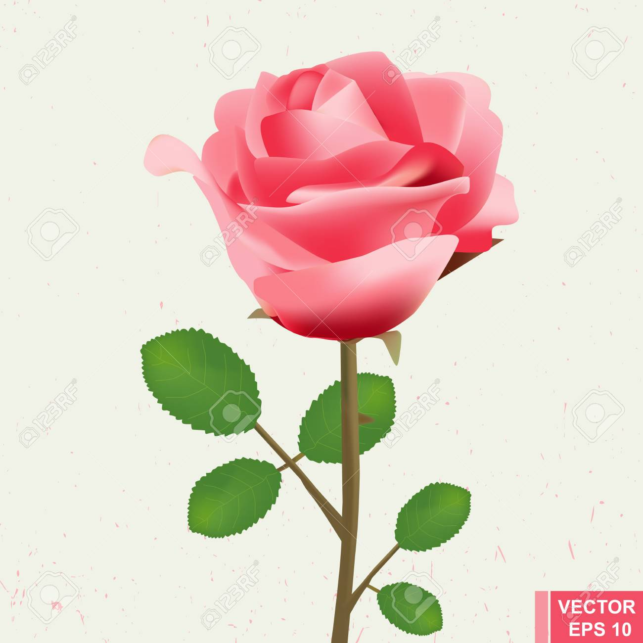 Realistic Flower Rose For Wedding Cards Festive Valentines