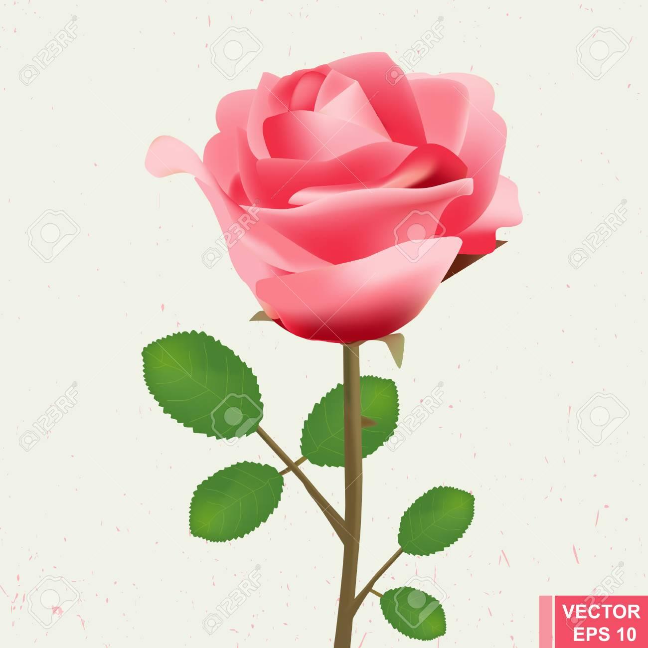 Realistische Blume Rose Fur Hochzeitskarten Festlich Valentinstag
