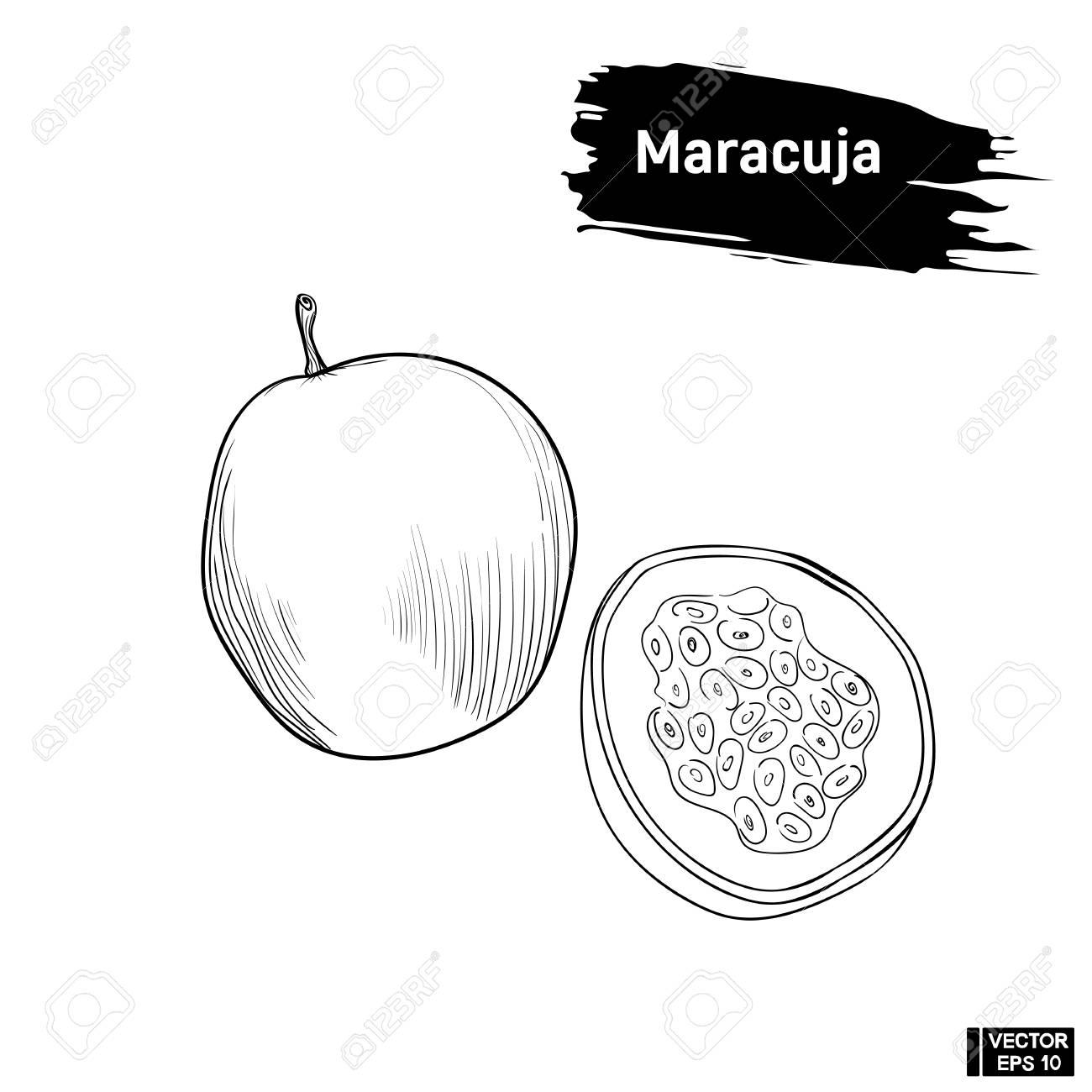Imagen Vectorial Boceto Blanco Y Negro De Maracuya De Frutas