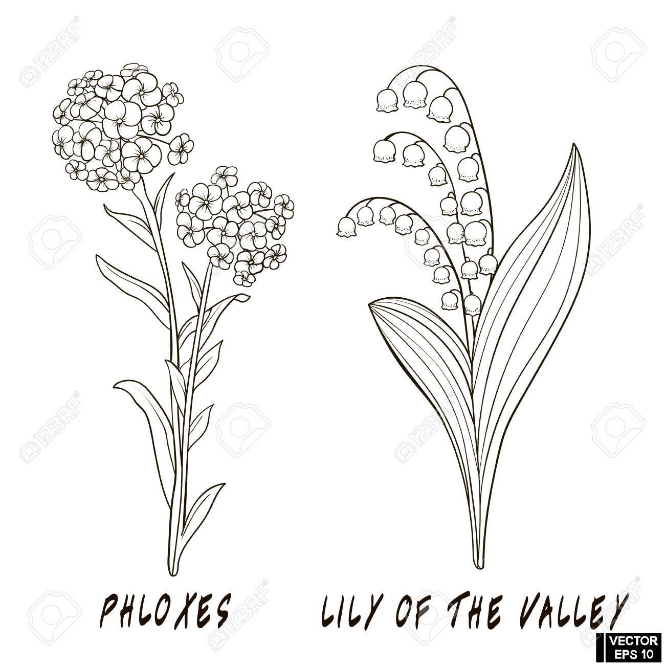 Vektorbild Blumen Zeichnen Hand Mit Tinte Eine Skizze Eines