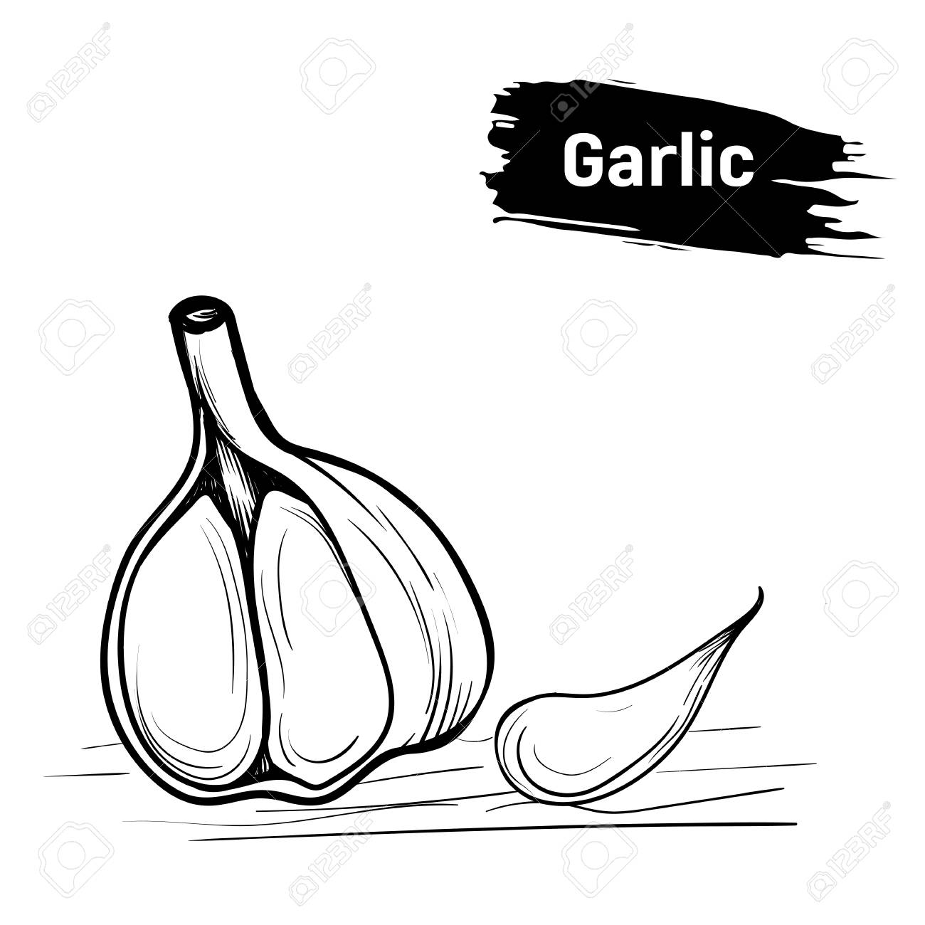 Sketch of garlic hand draw outlines in ink stock photo 90846370