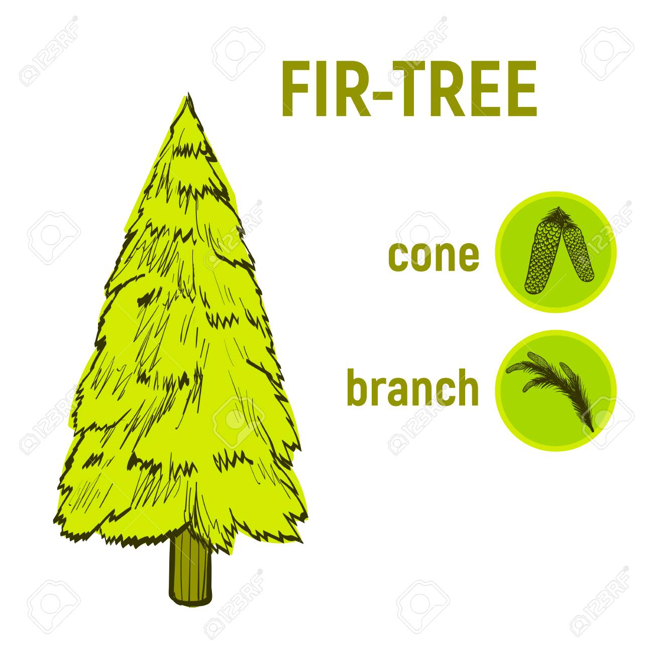 Color Drawing Of A Coniferous Tree, A Set Icon - A Fir-tree,.. Stock ...