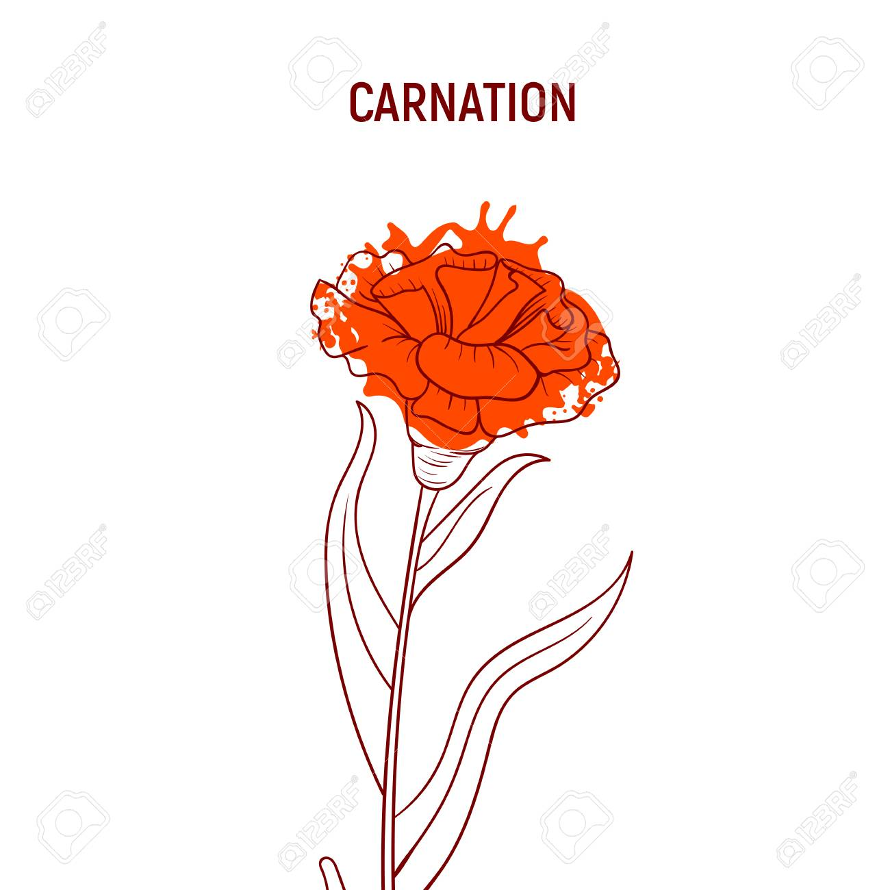 Color hand drawn sketch flowers  Red carnation doodle