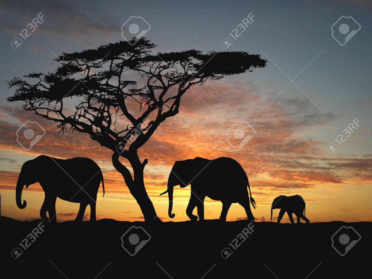 Group of elephant in africa Stock Photo - 1470954