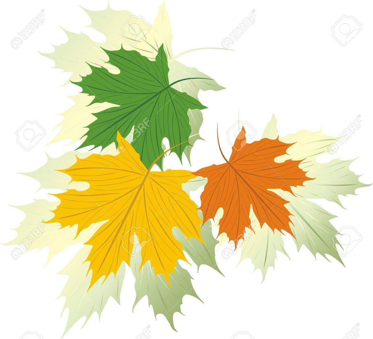 Three varicolored maple leaves. Vector Stock Vector - 5486697