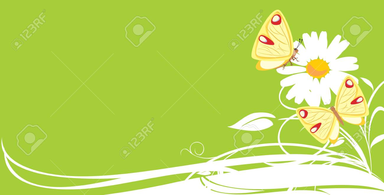 Chamomile and butterflies. Decorative banner Stock Vector - 9532819