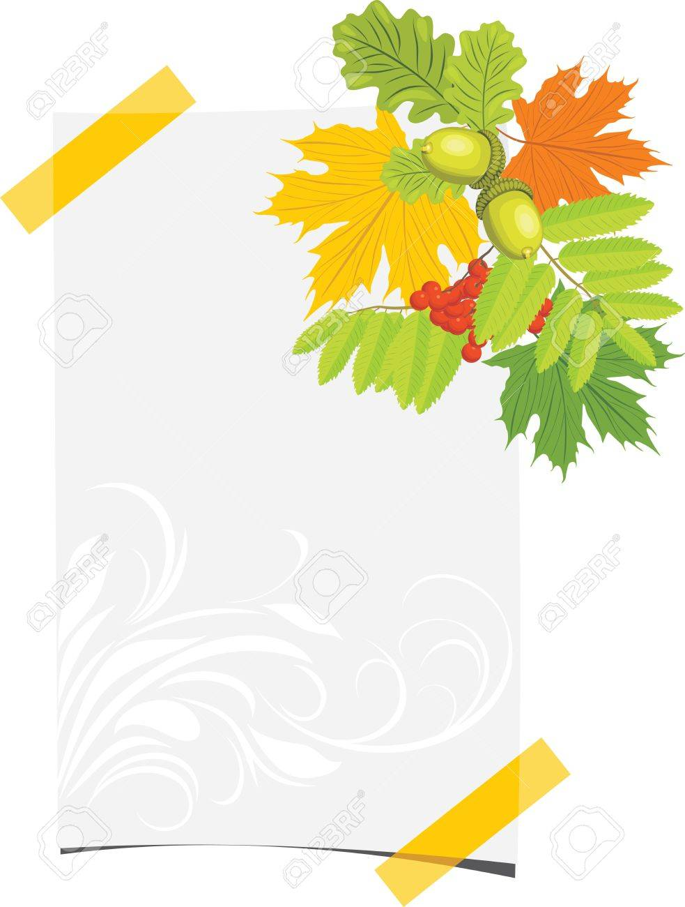 Curled paper sheet with acorns, rowan and maple leaves Stock Vector - 14837915