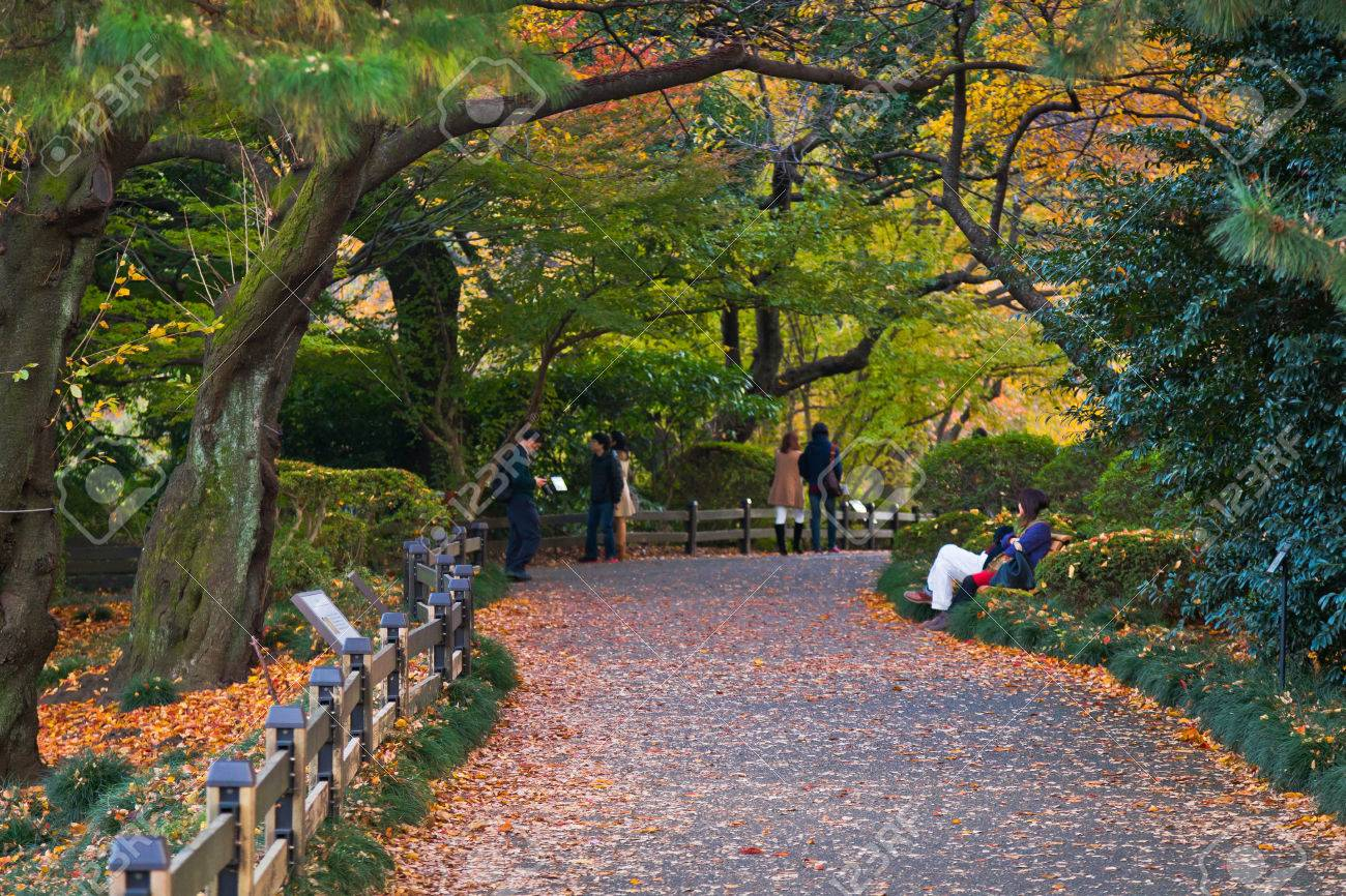 Yellow Autumn Leaves, Fall Autumn Color Trees, People Photo Taking ...
