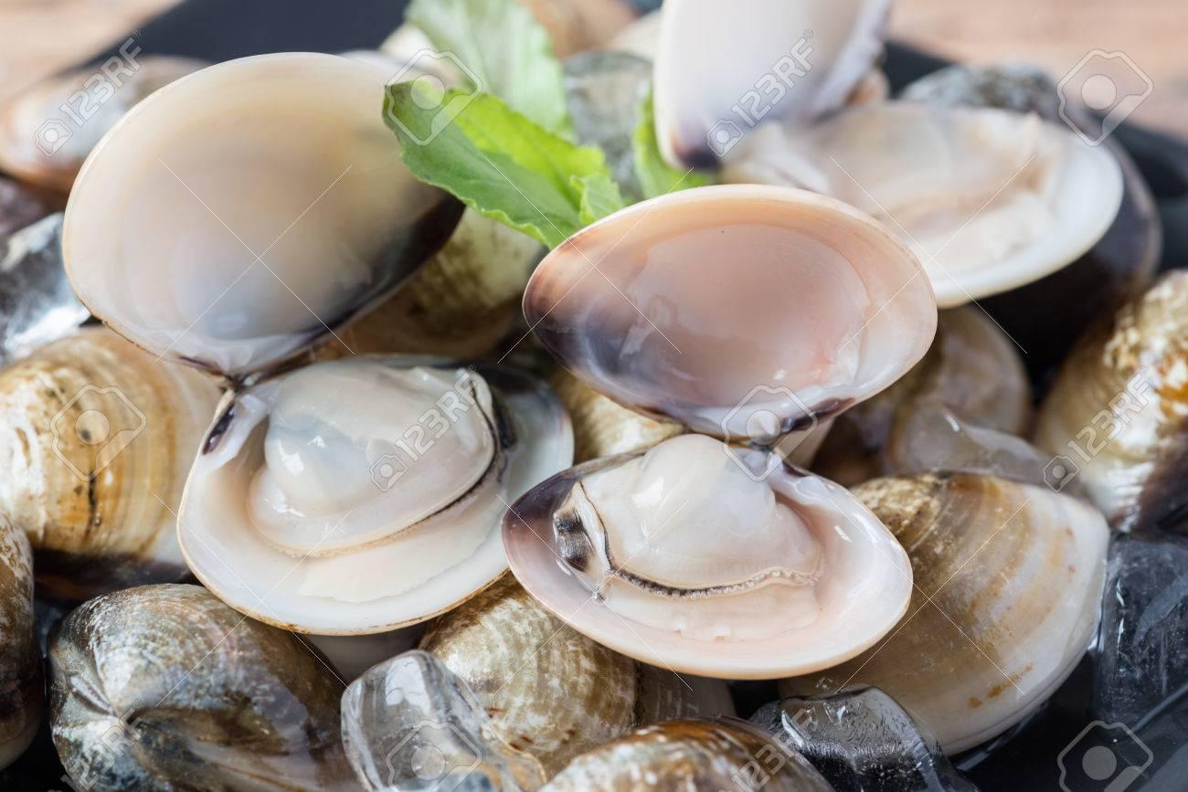 Fresh enamel venus shell (Meretrix lyrata) Meretrix is a genus of edible saltwater clams, marine bivalve molluscs in the family Veneridae, the Venus clams. - 83995643