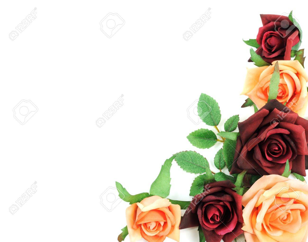 Batch of colorful roses on a white background Stock Photo - 13522645