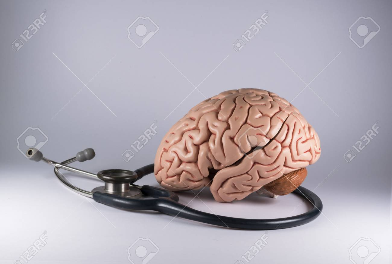 Artificial Human Brain Model And Stethoscope Stock Photo, Picture ...
