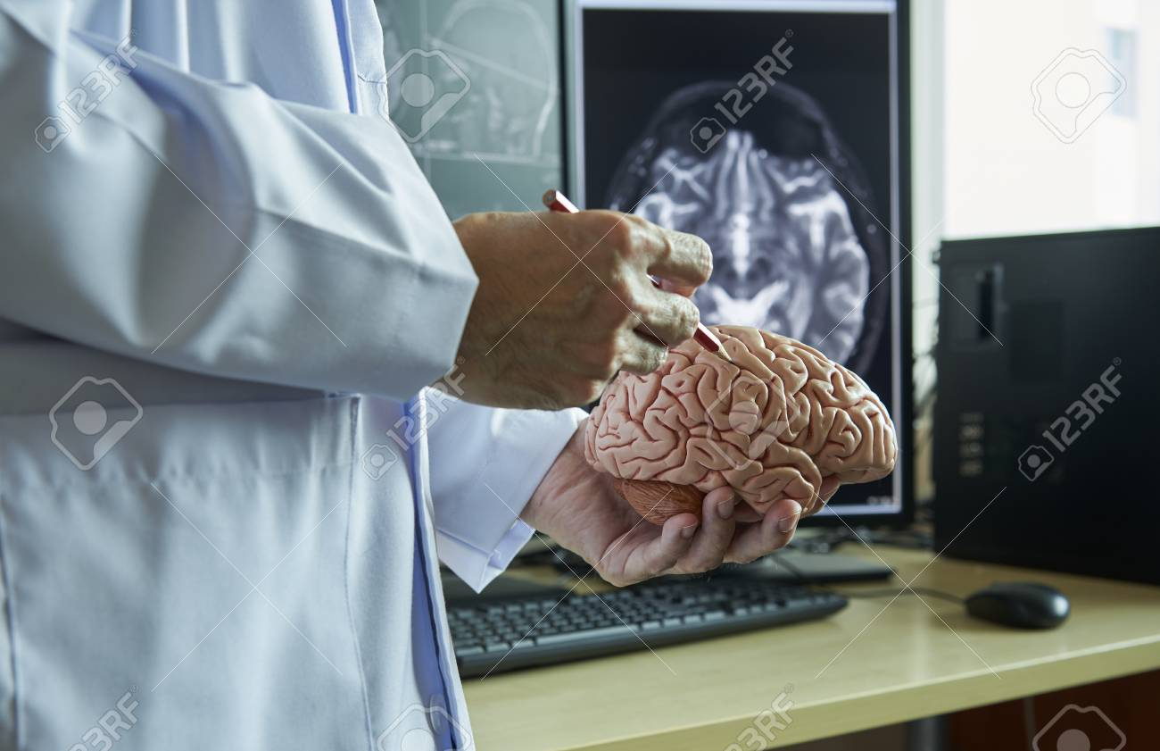 Human Brain Model On Doctor Hand Doctor Using Pencil To Demonstrate