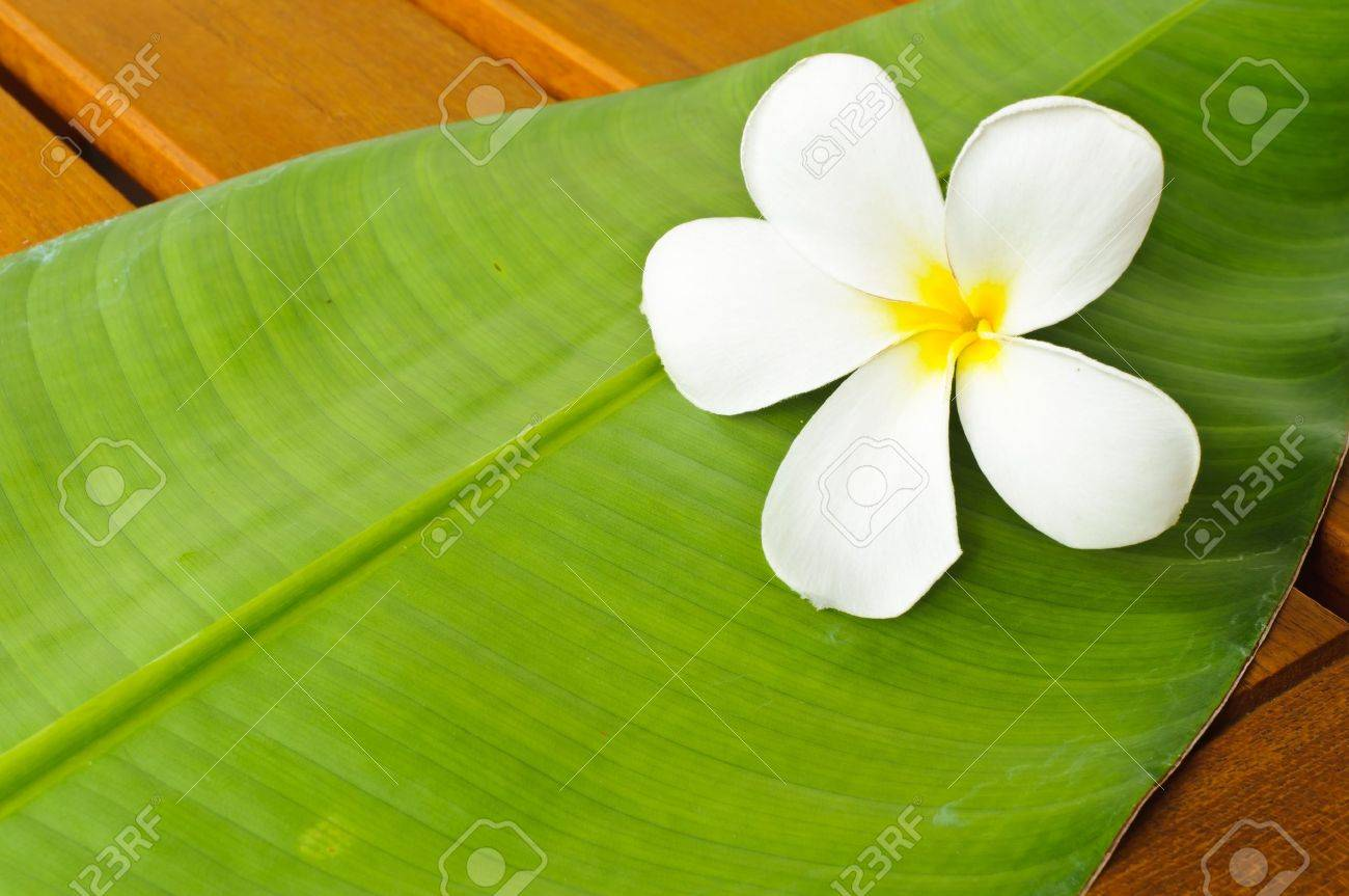 A white plumeria on a green leaf on top of a wooden table Stock Photo - 8019932