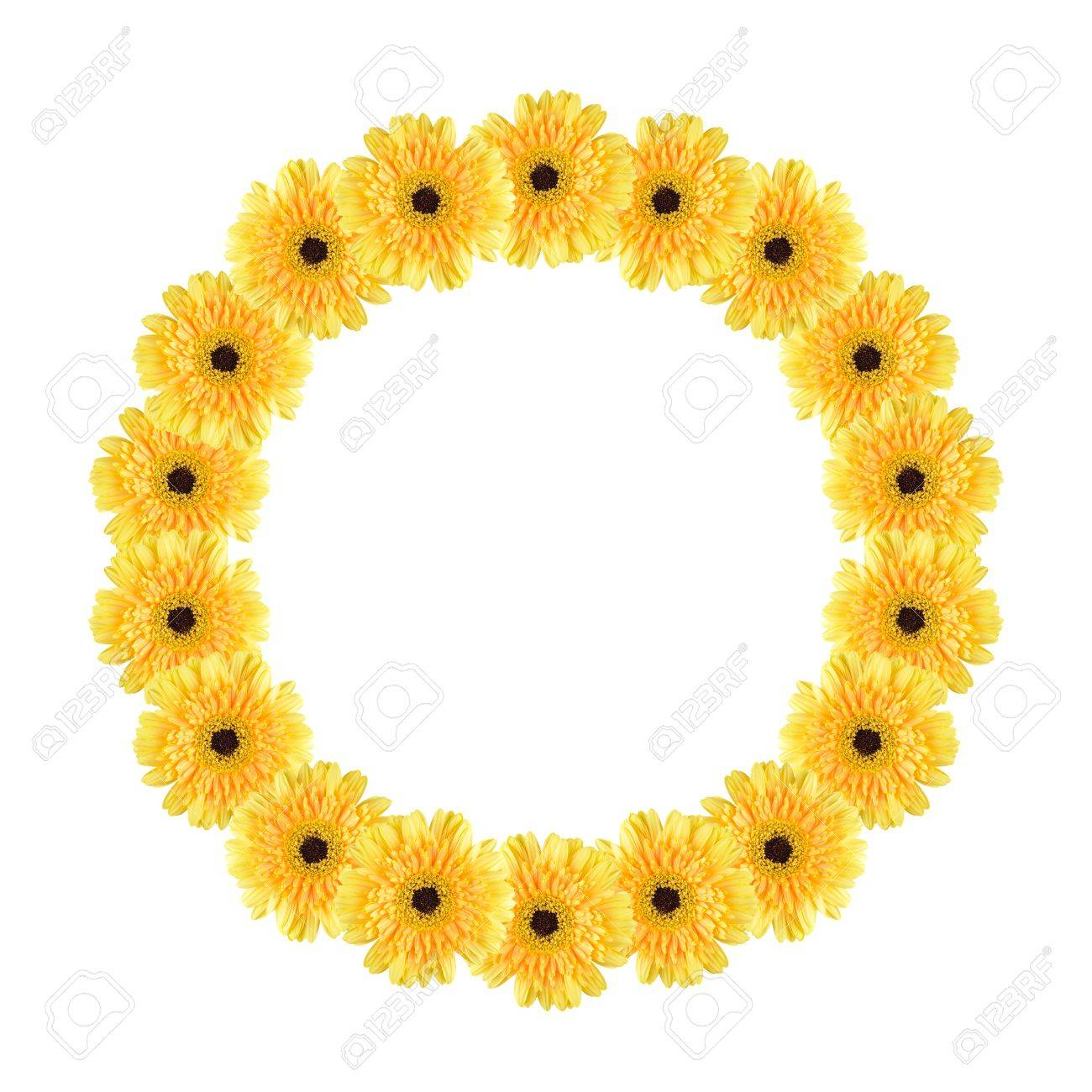 Flores Amarillas Daisy-gerbera Crean Un Marco De Círculo Sobre Fondo ...