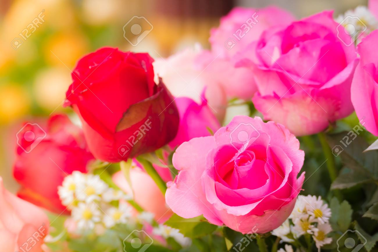Beautiful background with flowers roses valentine background beautiful background with flowers roses valentine background flowers background stock photo 51747279 izmirmasajfo