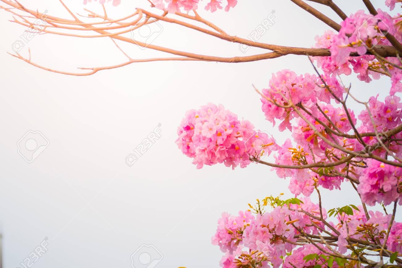Hermoso Fondo Con Flores Rosas Fondo De San Valentín El Fondo
