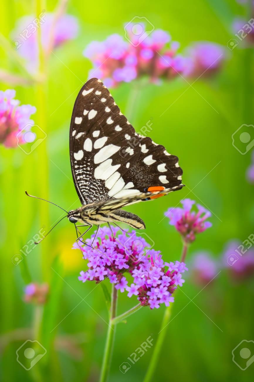 Schöne Schmetterling Auf Bunte Blumen Natur Hintergrund Lizenzfreie