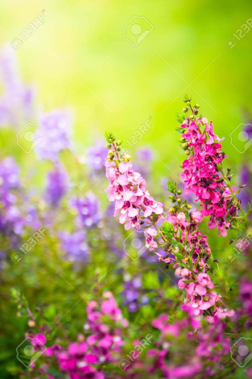 Immagini Stock L Immagine Di Sfondo Dei Fiori Colorati Natura Di Sfondo Image 83956203