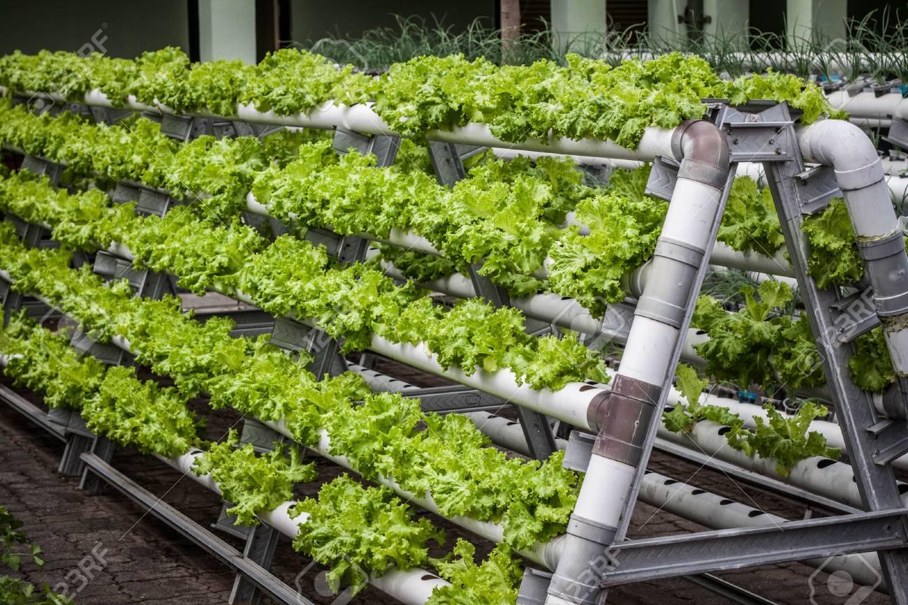 Verticale Tuin Systeem : ▷ verticale tuin mobilane livepanel plantenwand