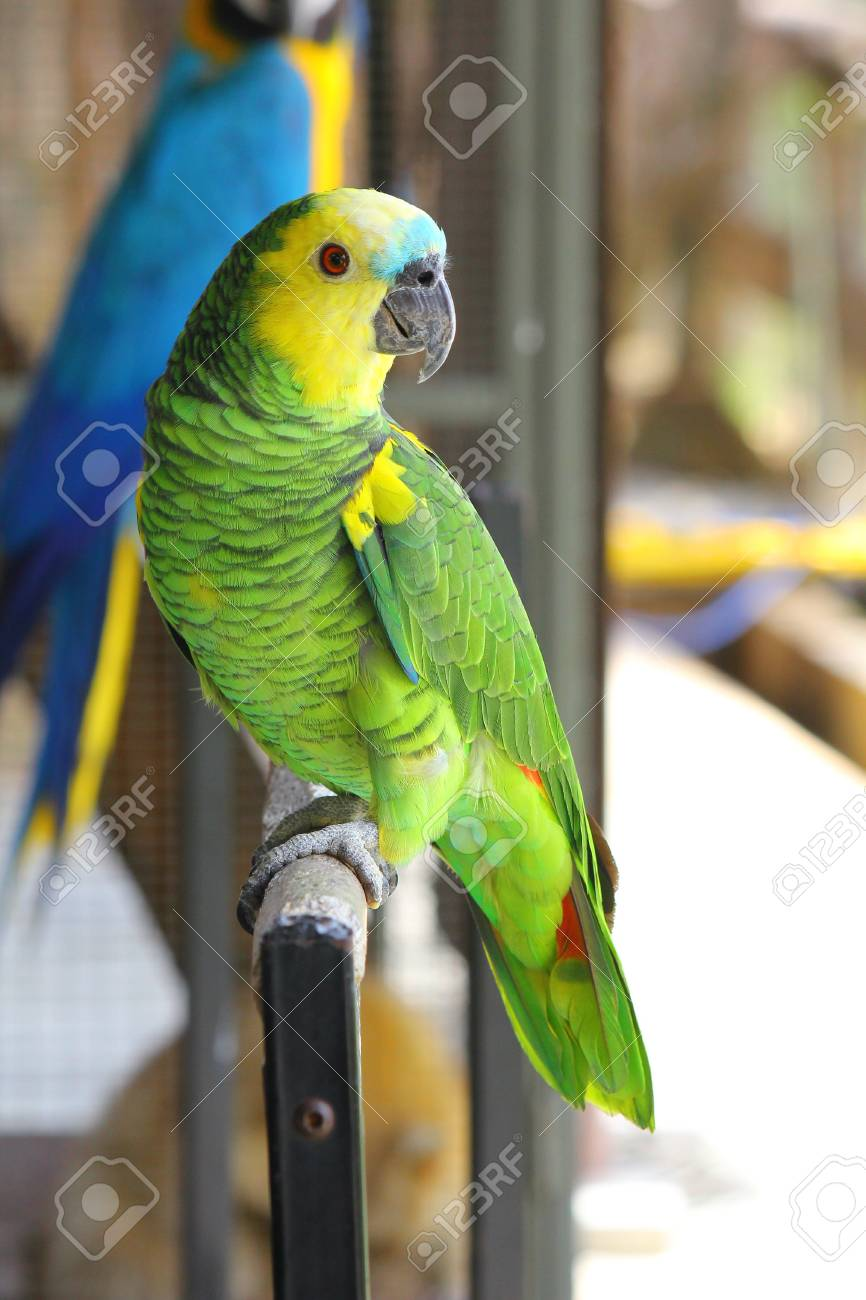 Parrot Macaw Stock Photo - 16459421