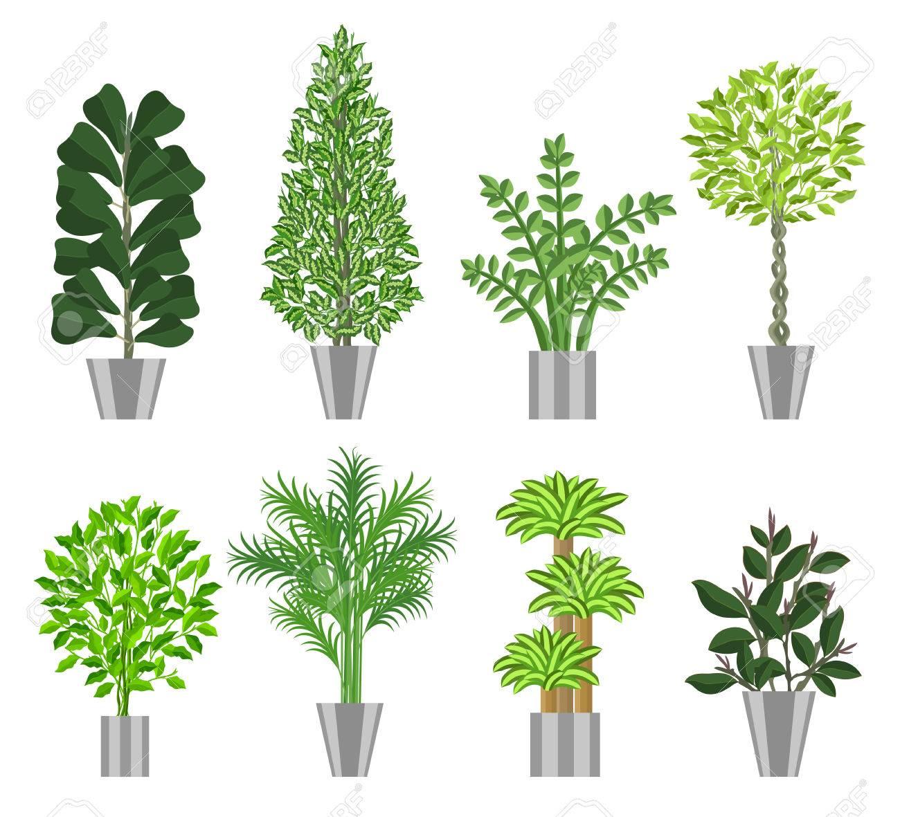grosse baume hauspflanzen sammlung grosse zimmerpflanzen in topfe fur die dekoration von innenraumen vektor