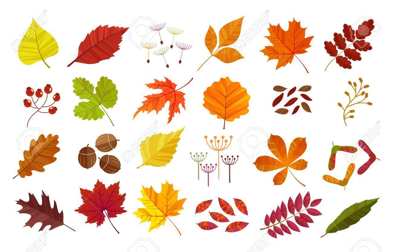 autumn leaves set isolated on white background cartoon flat rh 123rf com fall leaves cartoon pictures fall leaves cartoon pictures
