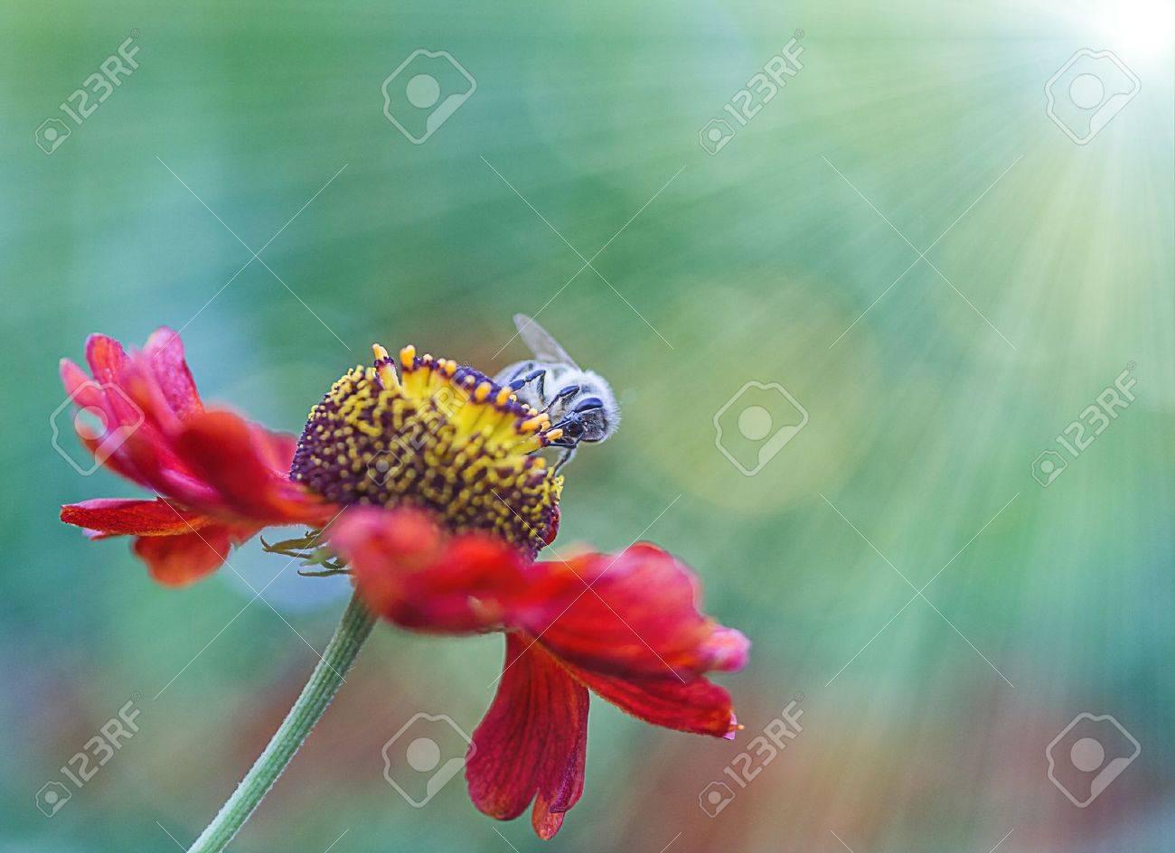honey bee on flower Stock Photo - 21535308