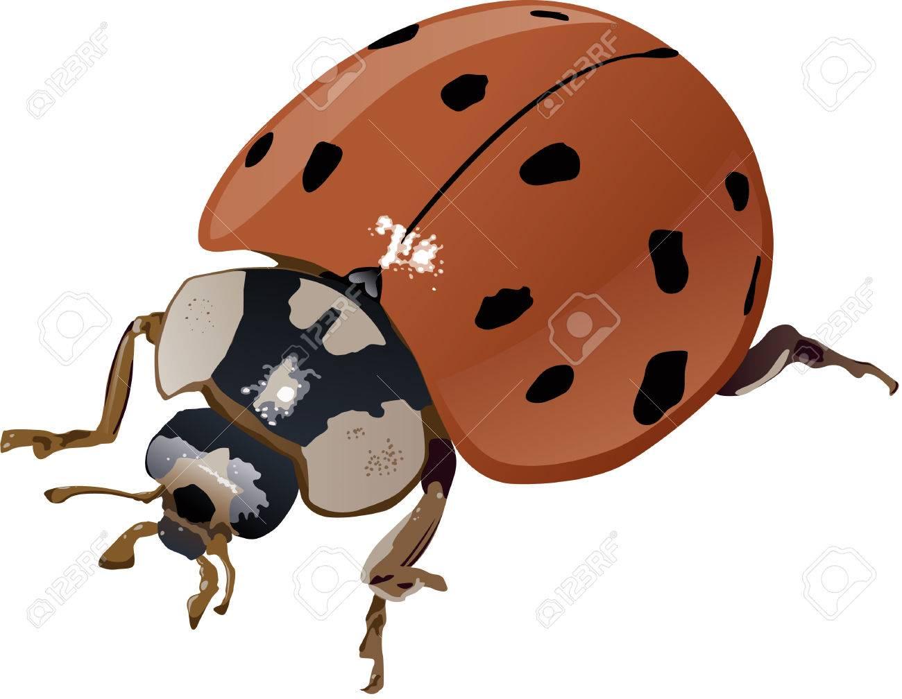 Adult sperhero bondage