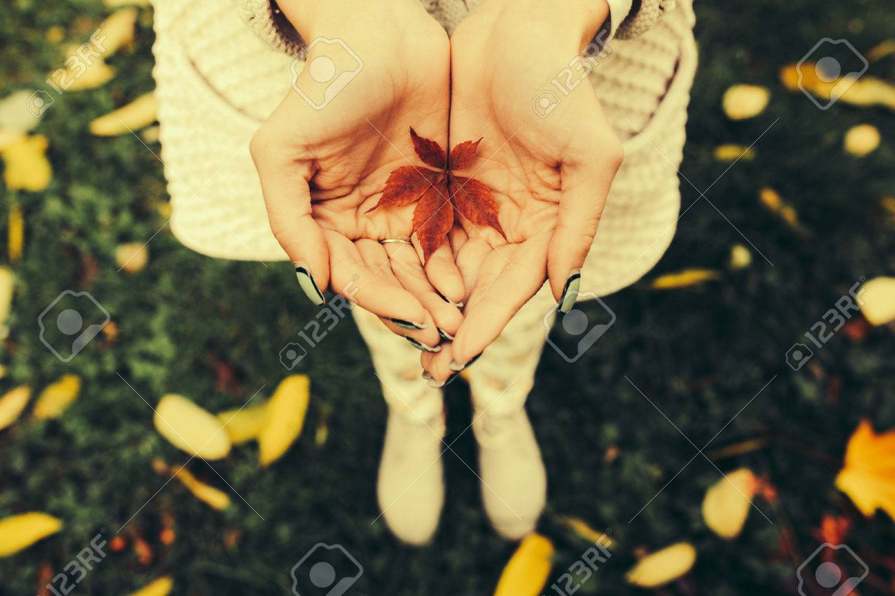 Autumn leaves in girl hands toned - 45482159