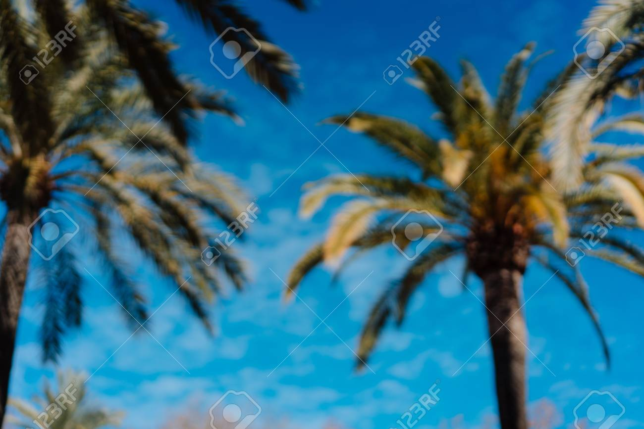 photo of tropical palm trees - 113090616