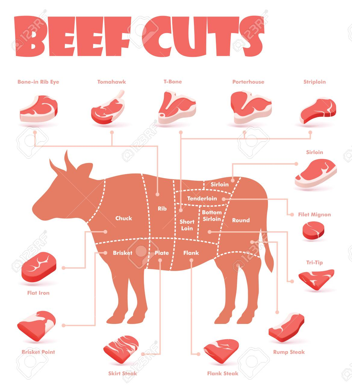 Vector beef cuts chart and pieces of beef, used for cooking steak and roast - t-bone, rib eye, porterhouse, tomahawk, filet mignon, striploin, sirloin, tri-tip and other popular steak cuts - 113575064