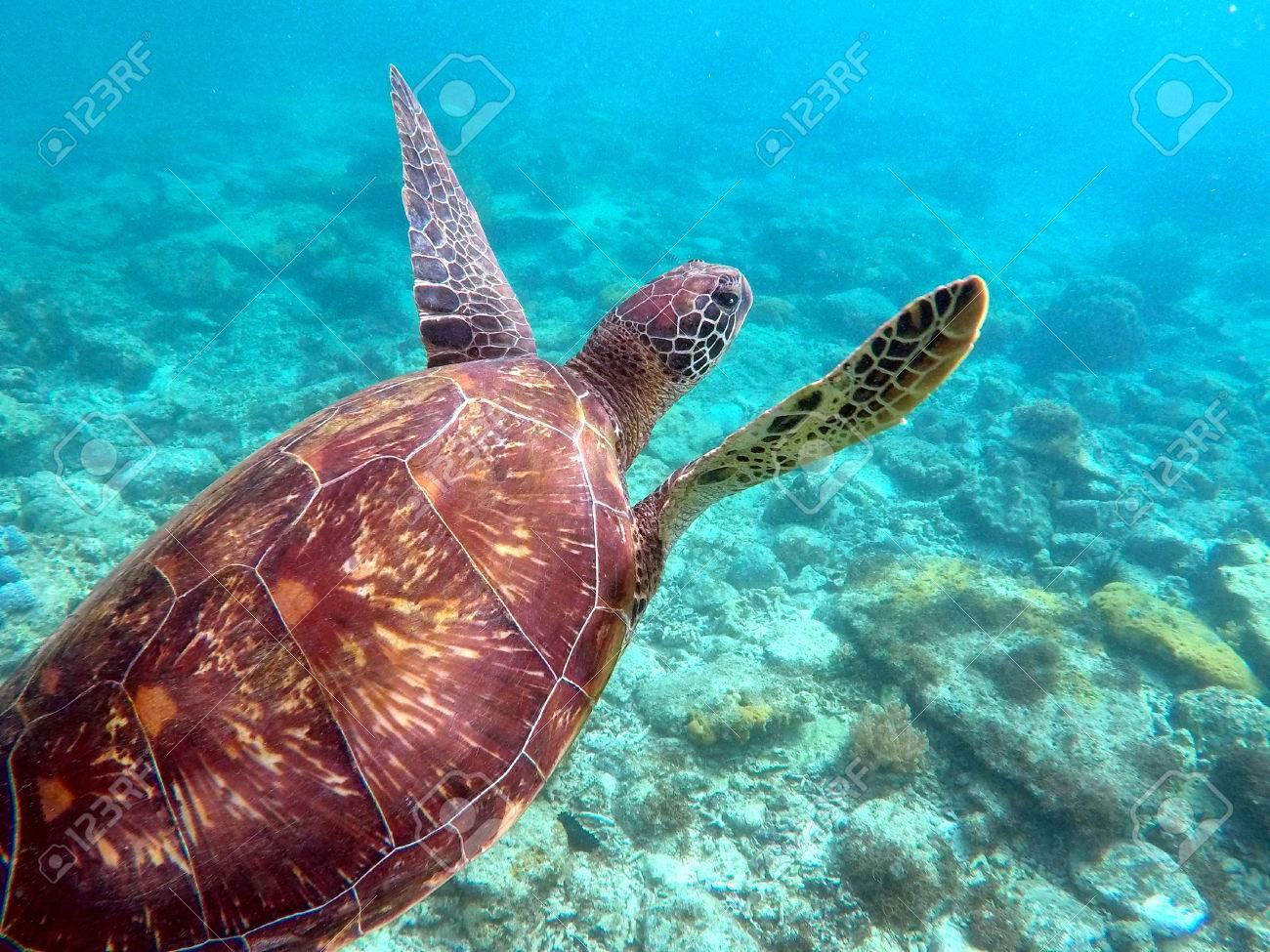 Atemberaubend Die Anatomie Der Meeresschildkröten Fotos - Anatomie ...