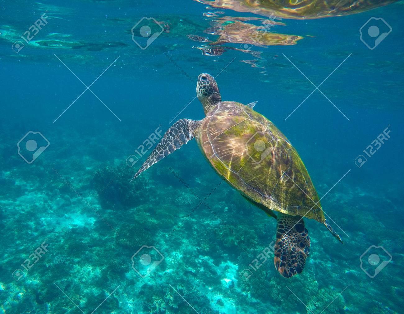 Berühmt Anatomie Der Meeresschildkröten Fotos - Anatomie Von ...