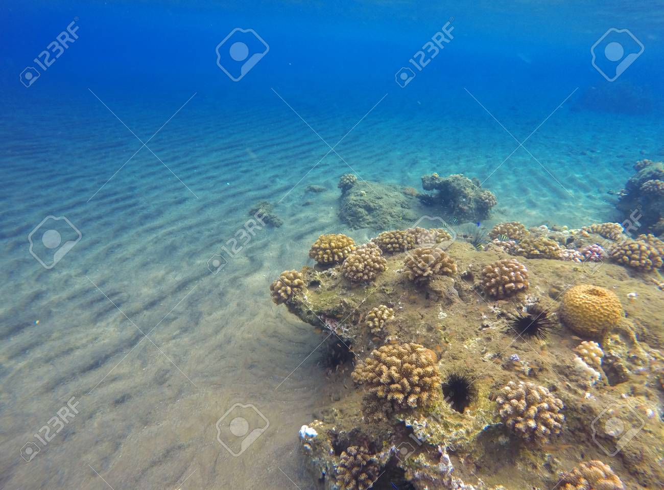 Tropic Sea Landscape With Sand Bottom And Coral Reef. Colorful ...