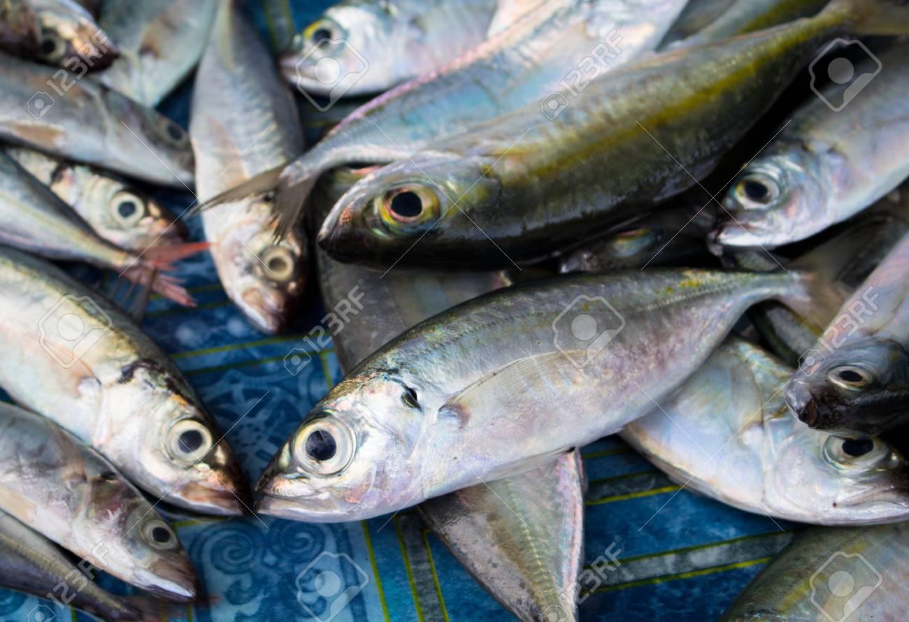 Manojo De Peces De Mar En La Mesa De Madera. Pescado De Mar Fresco ...