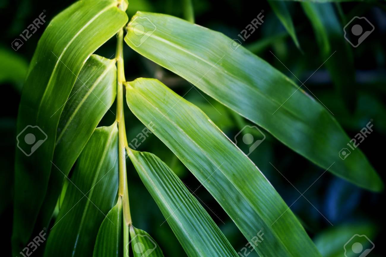 La Foglia Di Bamb.Foglia Di Bambu Brillante Su Sfondo Verde Foglia Di Bambu Tonica Foto Per Spa Design Salone Carta Da Parati Meditazione Poster Zen Foglia Verde