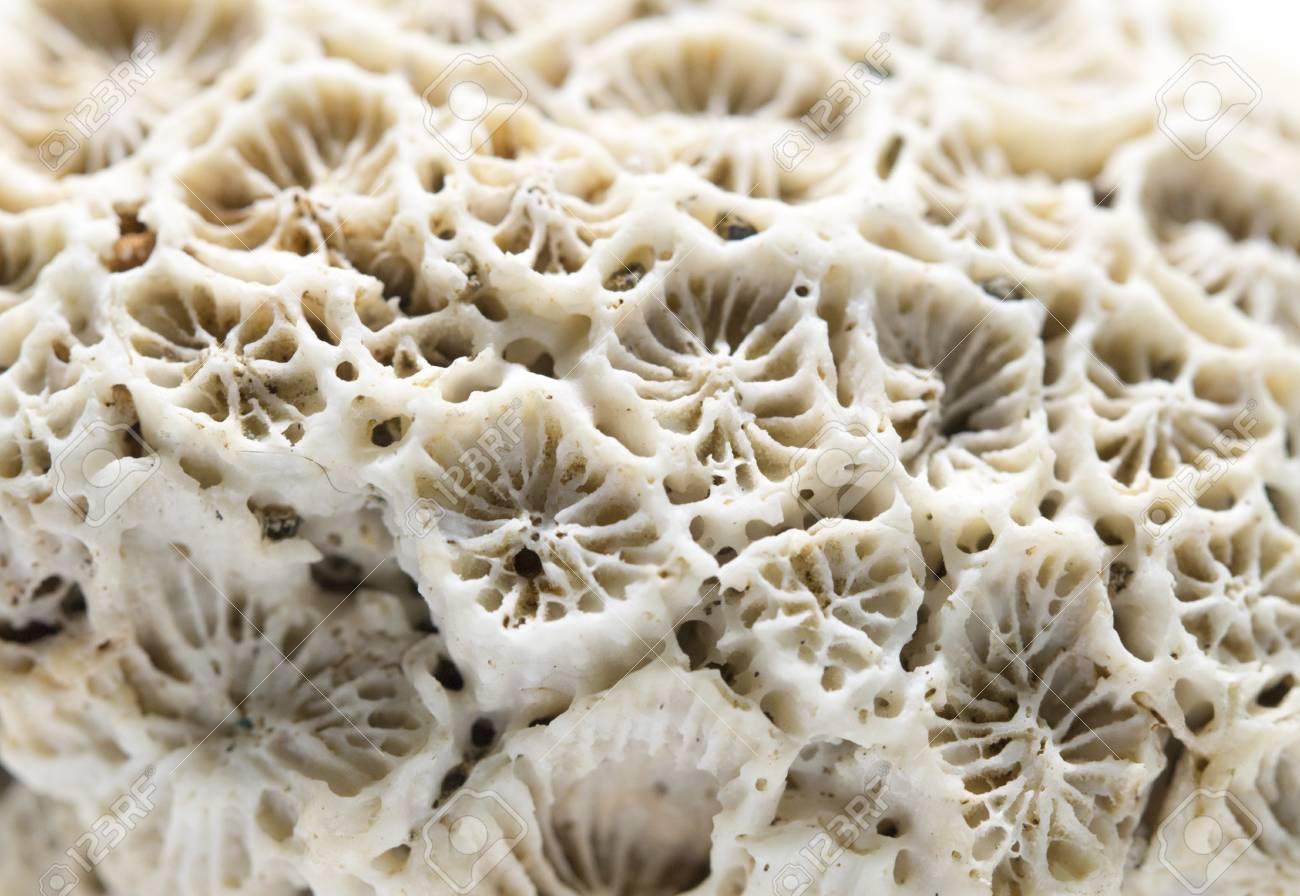 Primer Plano De La Textura De Coral. Foto Macra Del Arrecife De ...
