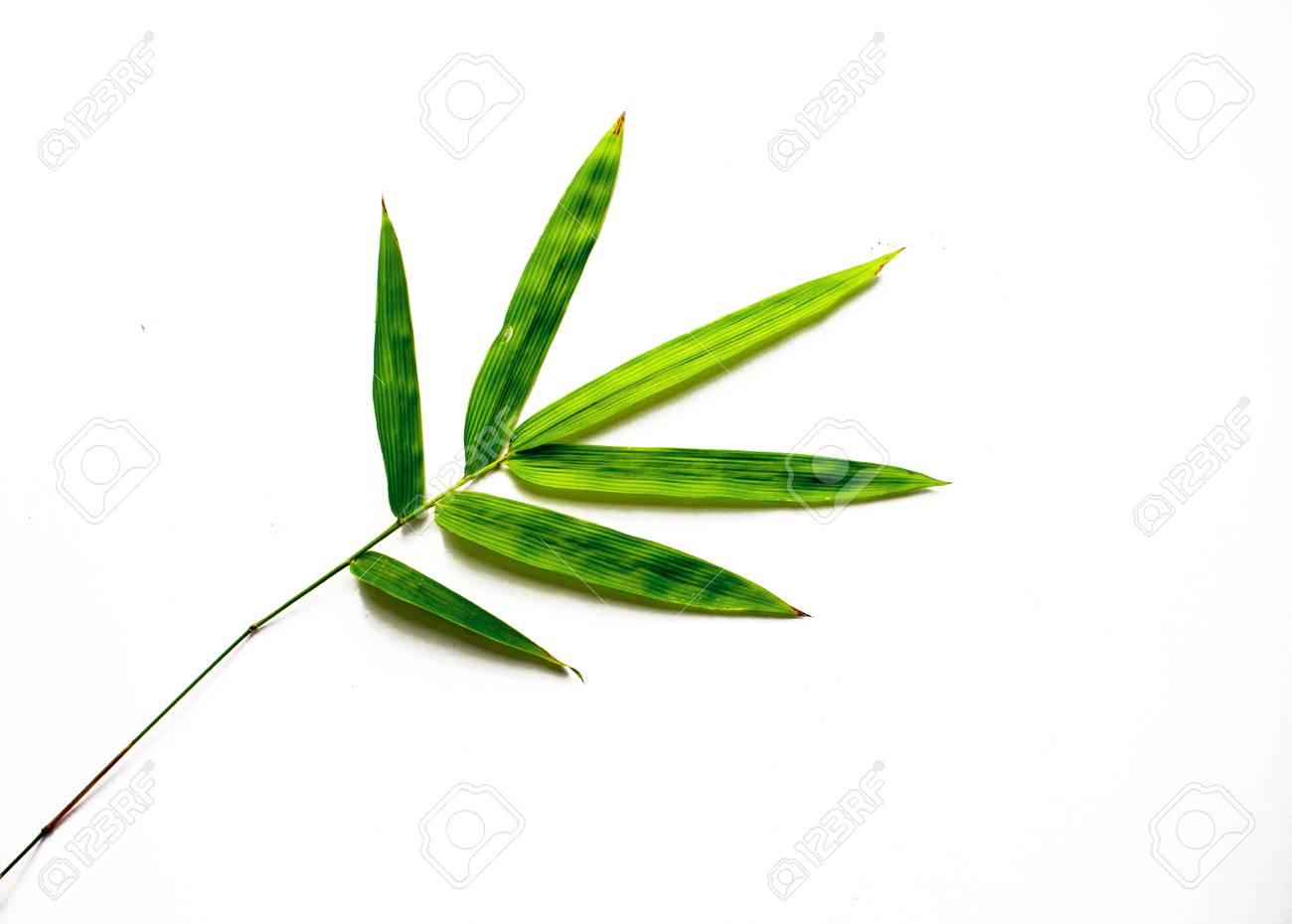 La Foglia Di Bamb.Foglia Di Bambu Verde Su Sfondo Bianco Singola Foglia Di Bambu Isolata Arredamento In Bambu Pianta Asiatica Sempreverde Arredamento Floreale