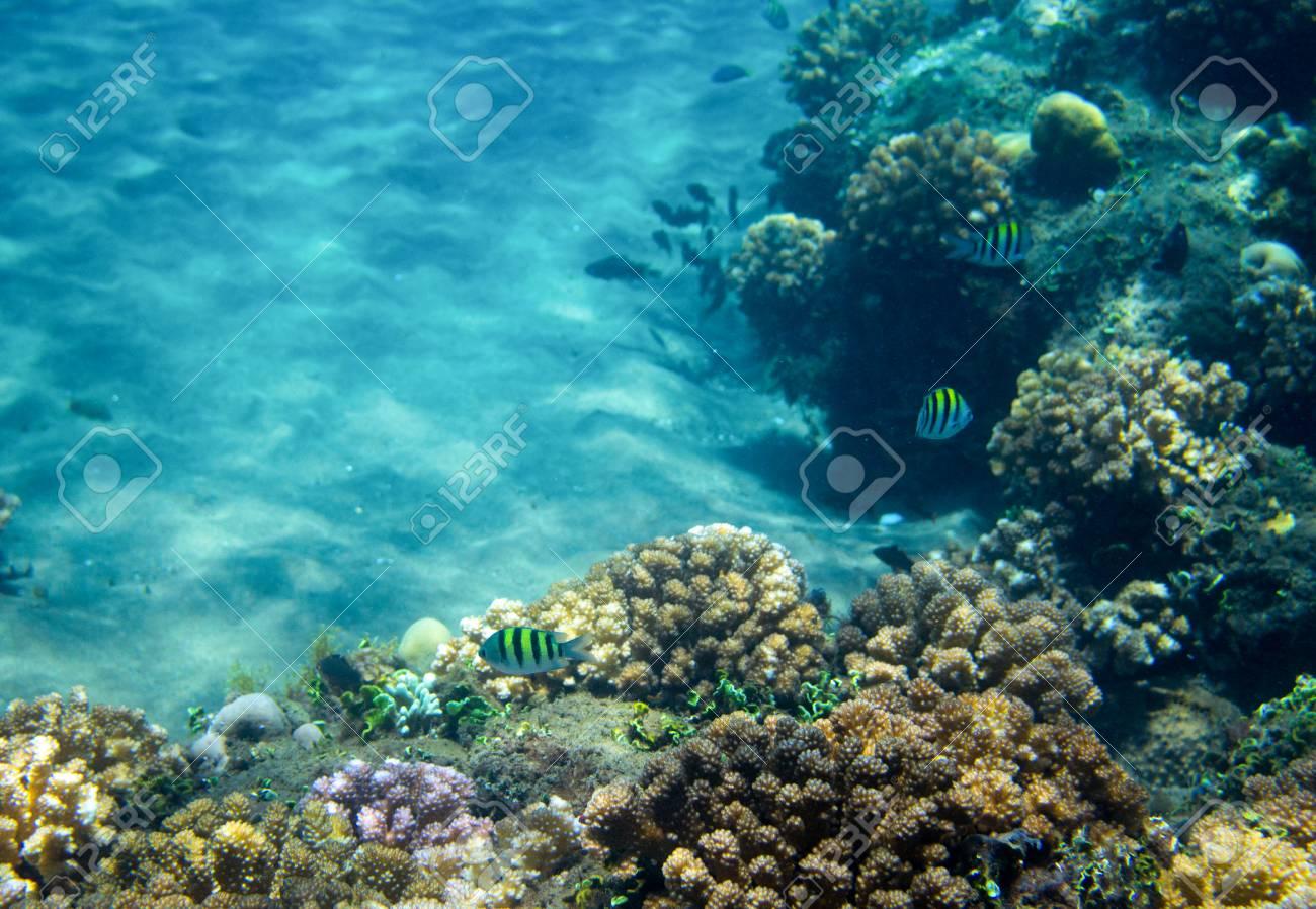 Escuela De Peces Marinos En El Arrecife De Coral Foto Subacuática