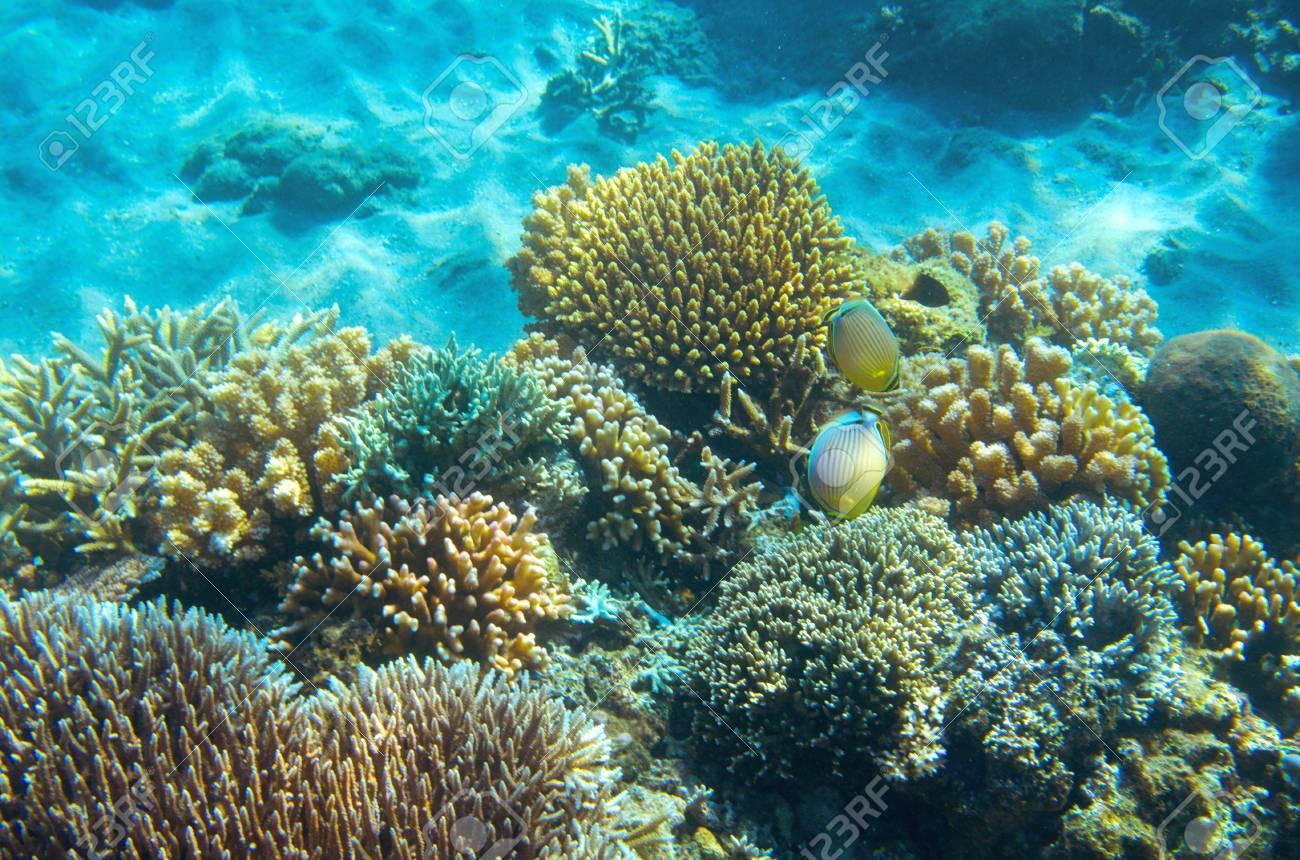 Vida Silvestre De Peces Marinos En El Arrecife De Coral Foto