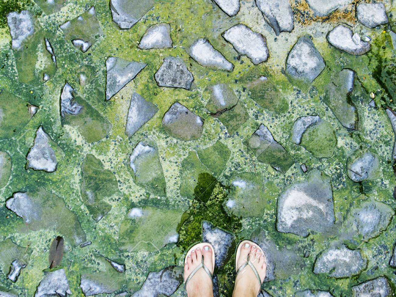 Woman Feet On Green Stones Background Mossy Stone Paving Texture
