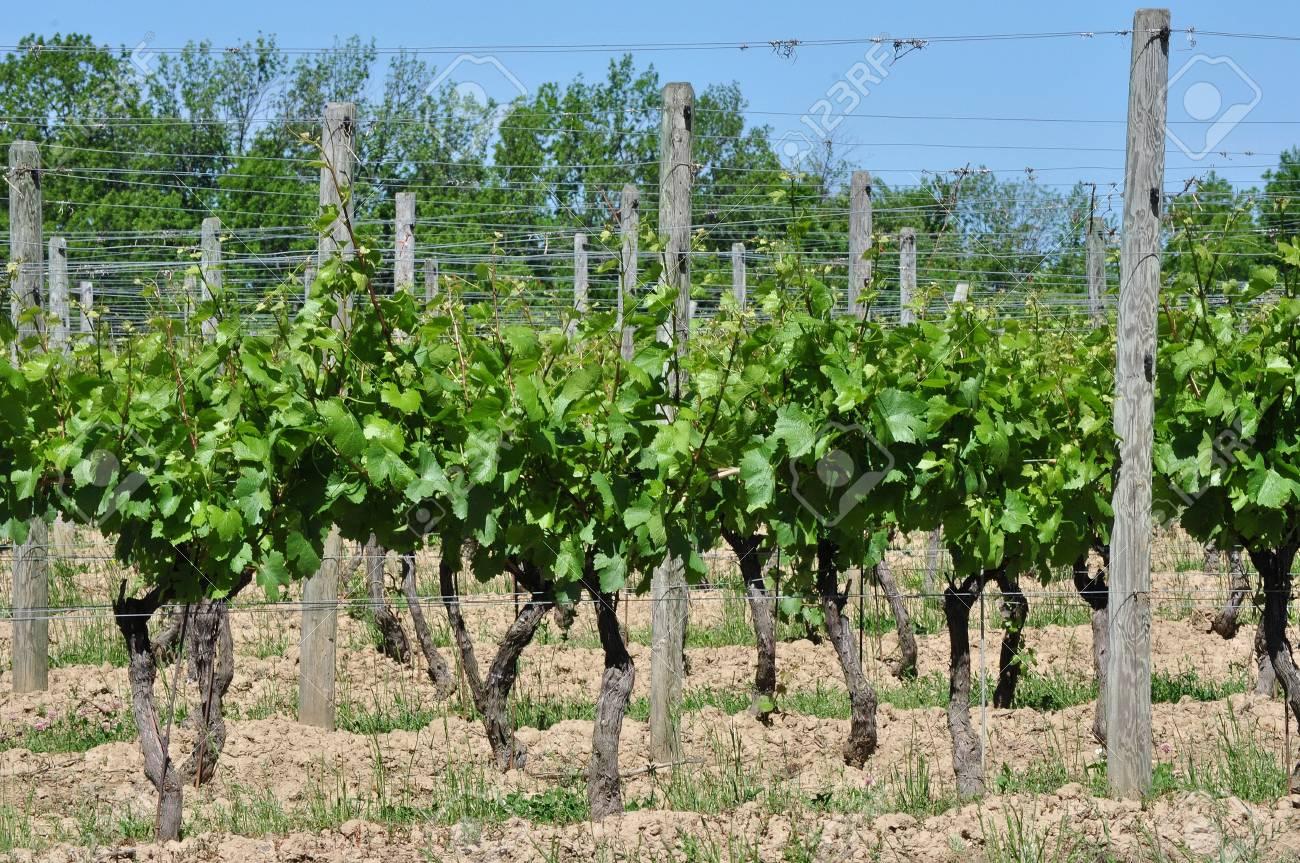 Winery Vineyards - 41156789
