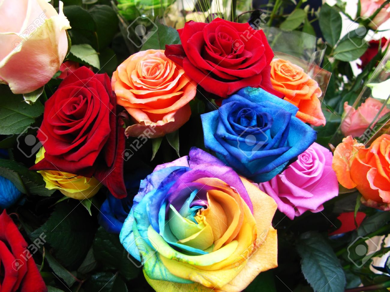 Variety Of Beautiful Roses Red Pink Blue And Rainbow Stock Photo Picture And Royalty Free Image Image 10317359