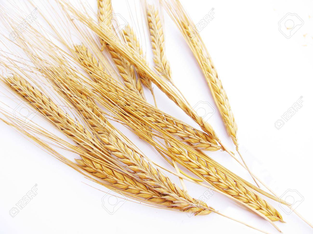 Wheat stalks isolated in white background Stock Photo - 10417025
