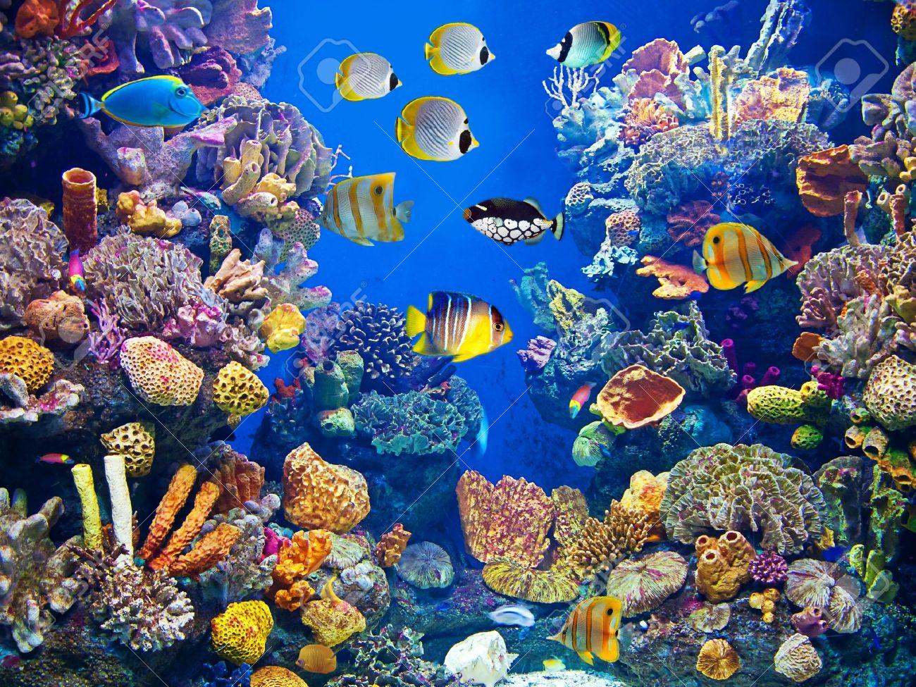 pesci acquario affinità di coppia: i quattro elementi melissa ... - Acquario Ascendente Pesci Affinità
