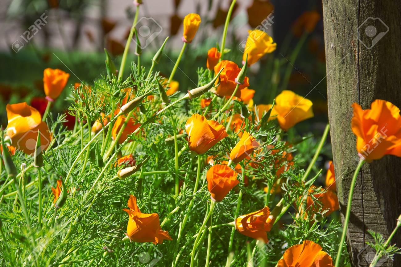 Schones Feld Der Blumen Im Fruhjahr In Spanien Lizenzfreie Fotos